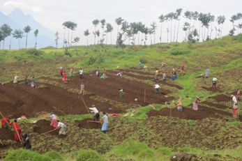 Remera Community's Potato Farming Project