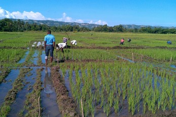 Smallholder Alliance for Rice Development in Torbeck (SMARD)